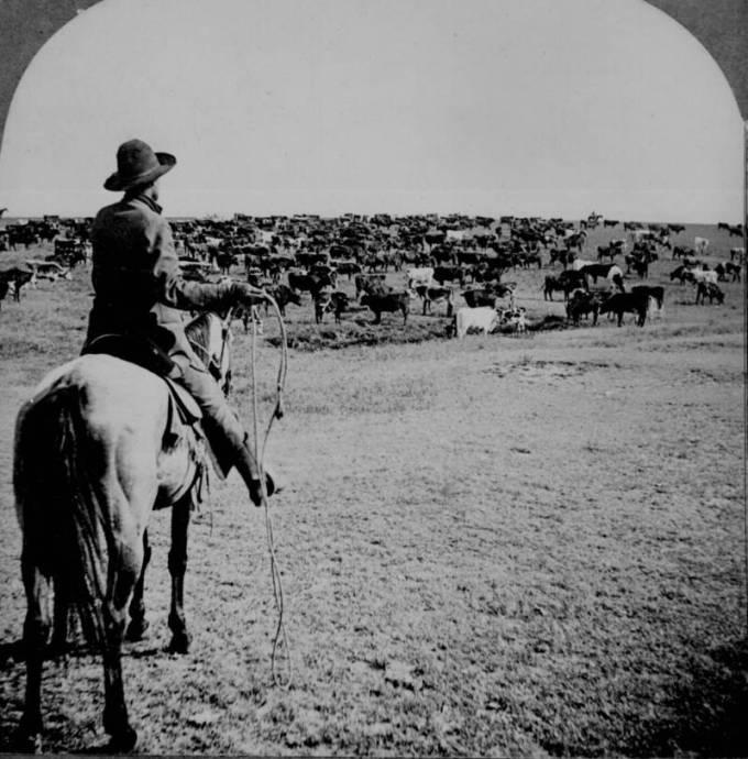 cowboy-roundup-sherman-ranch.jpg