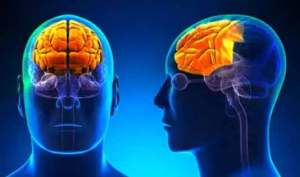 Responsable de la escritura, nuestro cerebro