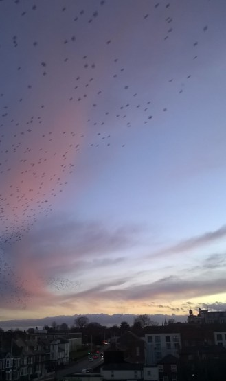 Birds Over Norwich 2