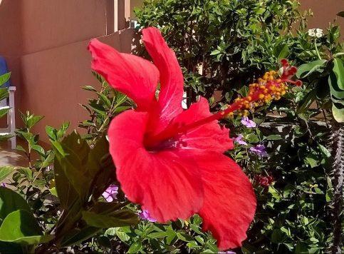 more-spanish-flora