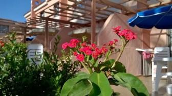 spanish-flora