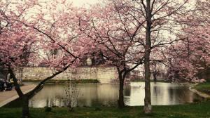 springtime in maastricht