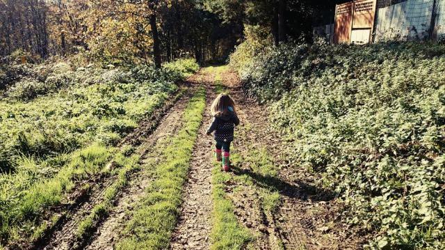 Ein schöner langer Spaziergang im Wald.