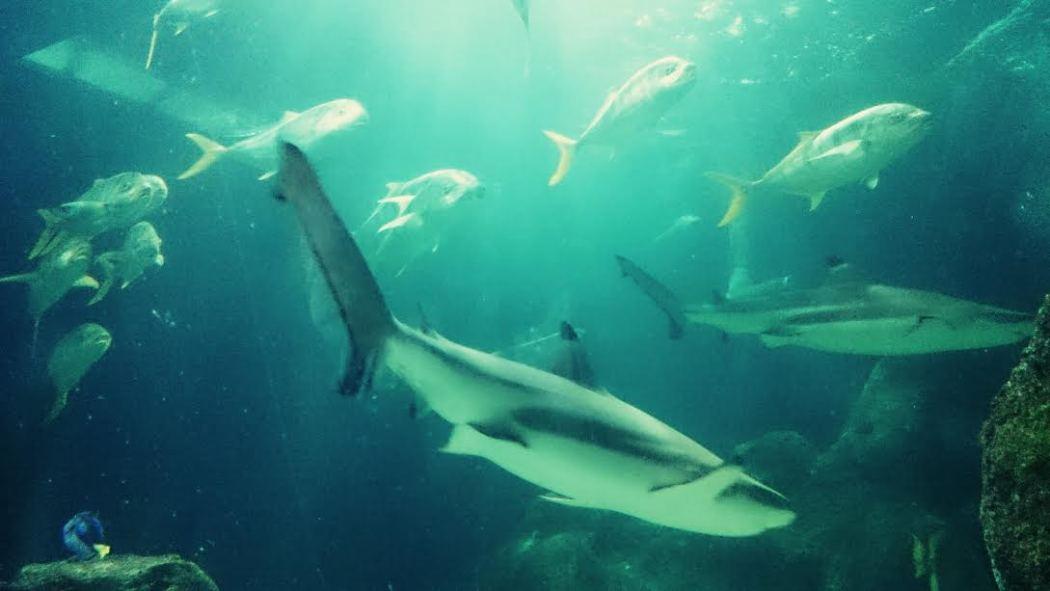hai-und-dory-sea-life