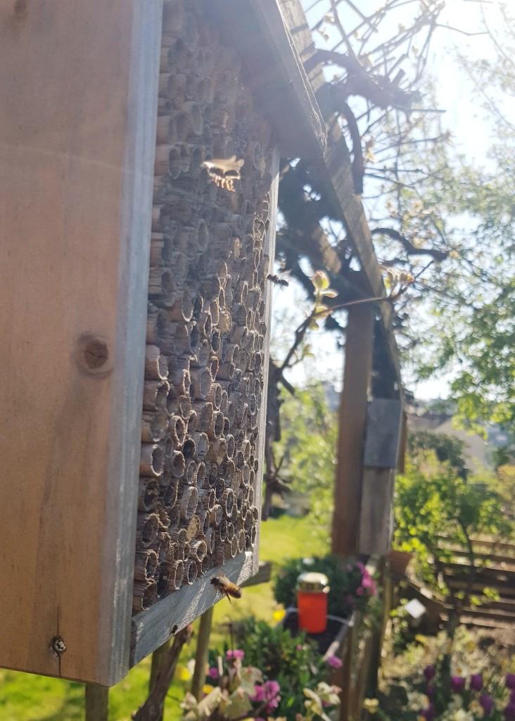 Perlenmama, Wochenende in Bildern, Ostern 2019, Insekten, Bienen, Insektenhotel
