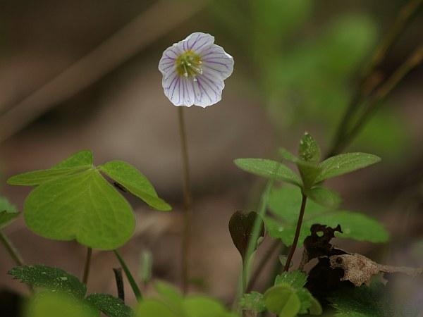 blommor_2_090521