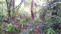 Deszcz i burza obserwowane w lesie:)