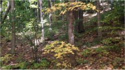Europejski las i znajomy ptasi chór jesienią