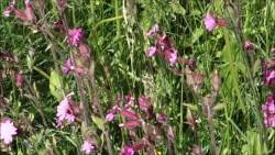 Bogate  życie łąki :)