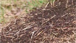 Posłuchajmy … miasta mrówek!