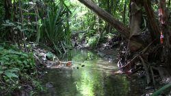 Strumyk w deszczowym lesie w Kostaryce