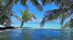 W cieniu palm, brodząc w Oceanie Indyjskim