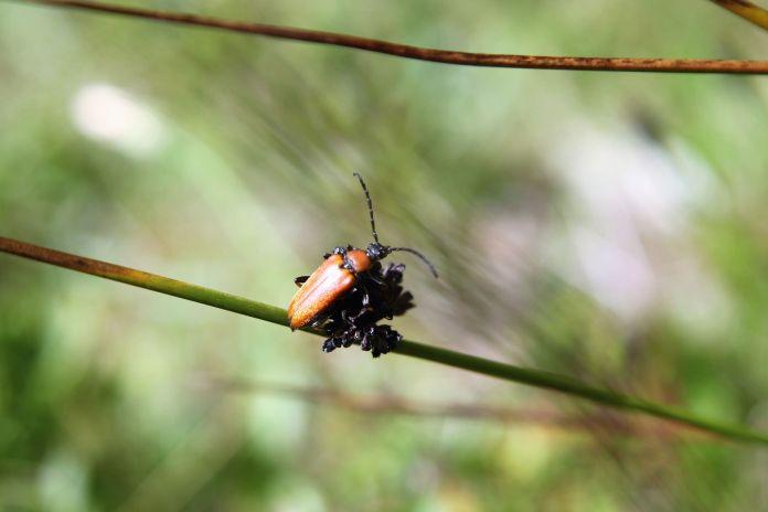 owad1