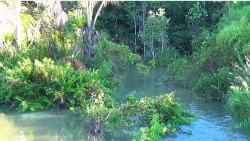 Szmer brazylijskiej rzeczki, ptaki i brak komarów!