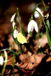 Wiosna jest już blisko:)