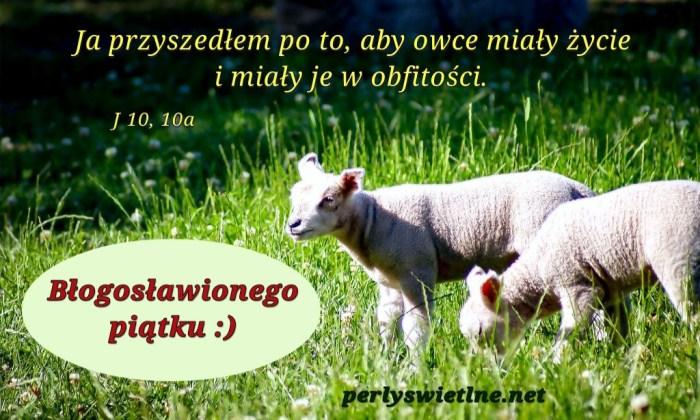Dobry Pasterz (BŁ)