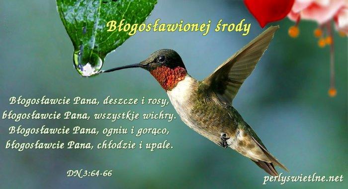 Błogosławcie Pana, deszcze i rosy…