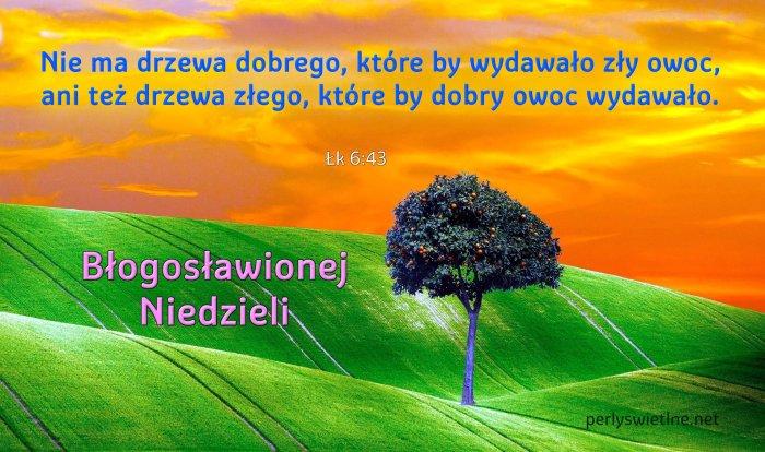 Nie ma drzewa dobrego, które by wydawało zły owoc…