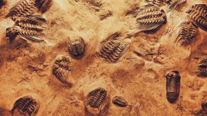 close up photo of fossils