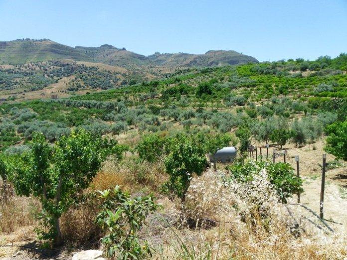 Frutteto Valle del Salso Frutteto Valle del Salso permarancia