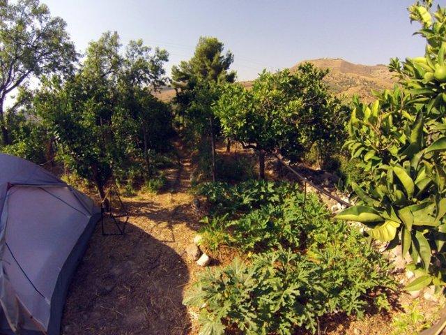 Orto fra gli agrumi food forest