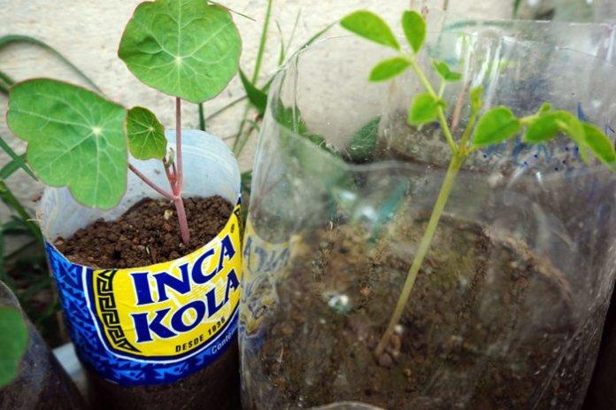 piante permacultura peru