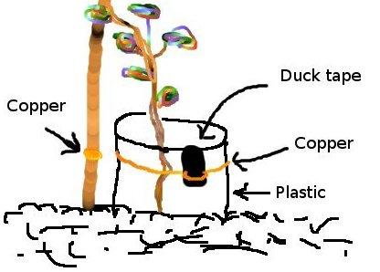 trappola rame lumache permacultura