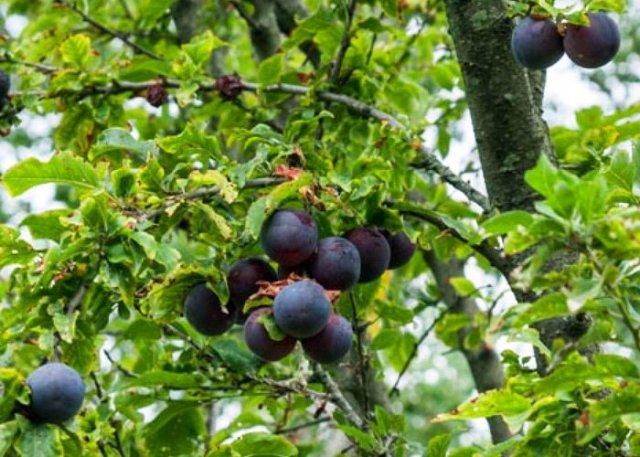 food forest la boa permacultura