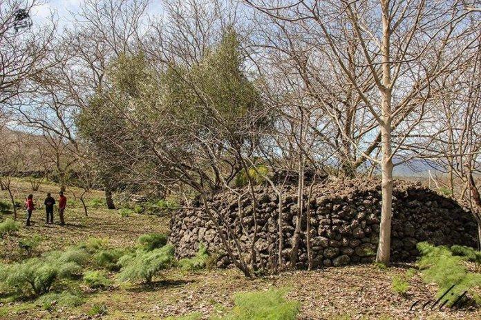 food forest contessa etna permacultura