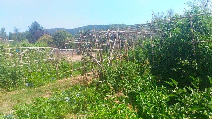Orti Bolsena permacultura