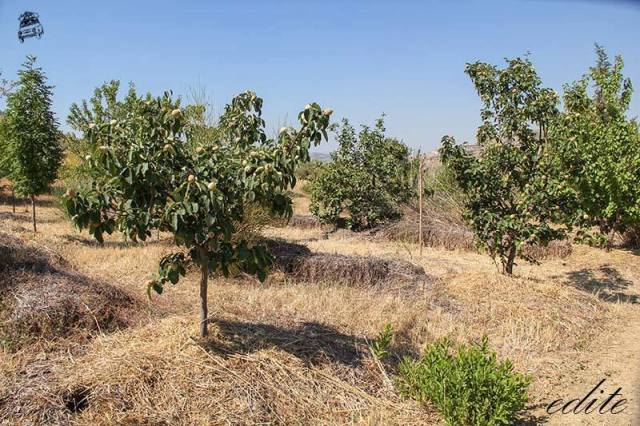 aridocoltura permacultura food forest sicilia