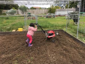 Madison, Lucy's daughter, rotary-hoeing a vegetable garden