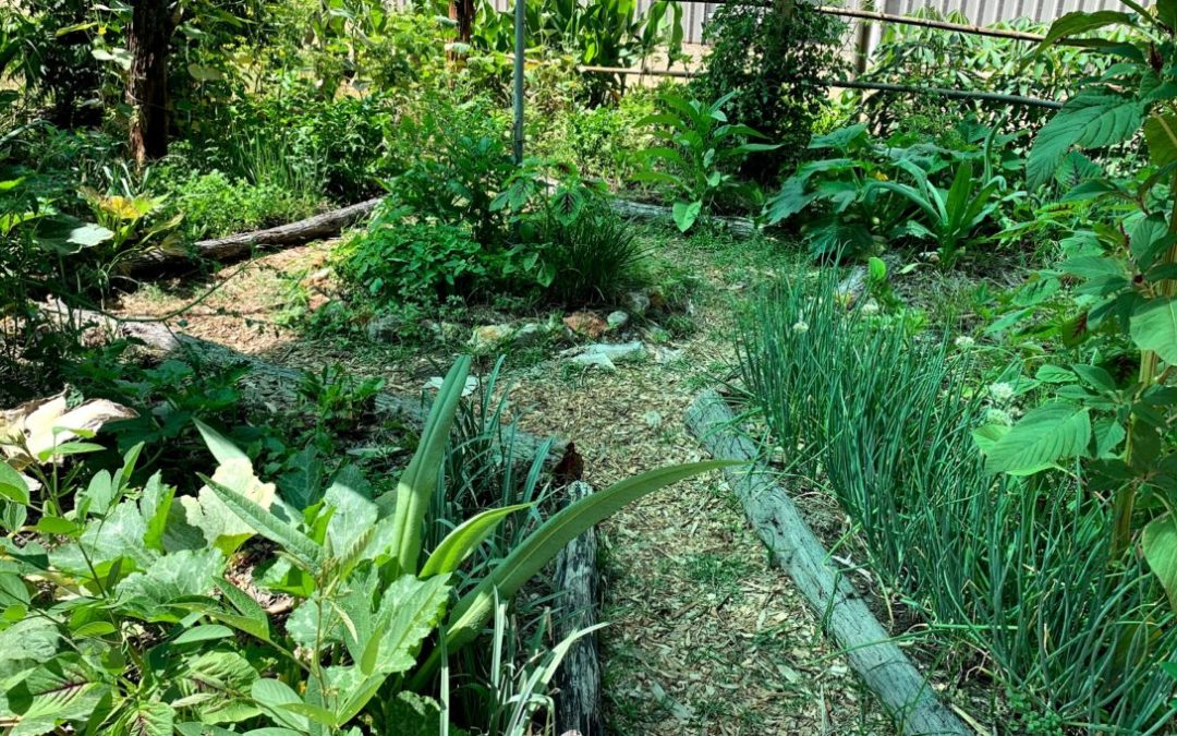 Permaculture Haven