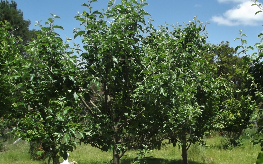 Get Growing – Your own food