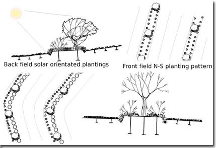 Setting-Permaculture-Farm-18
