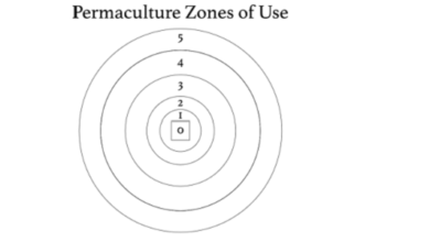 Using Permaculture to Improve the Teaching and Learning of