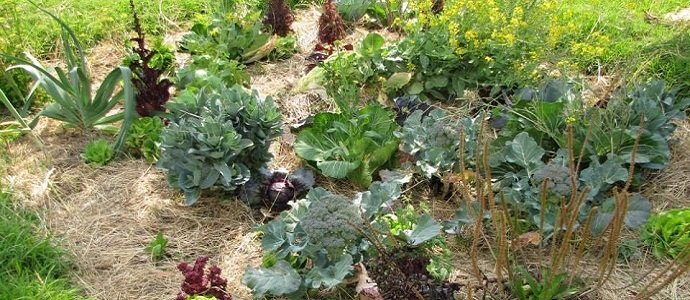 5 Simple Ideas For Transitioning Into A Permaculture Garden The