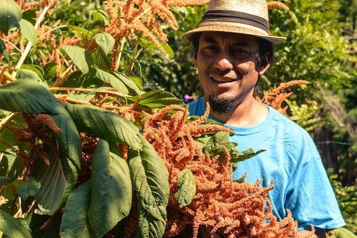 Instituto Mesoamericano de Permacultura - Preisträger des Permaculture Magazine