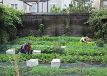 Small Permaculture Garden Design
