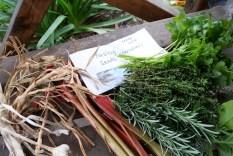 Herbs and rhubarb