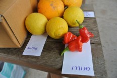 Oranges, limes and chillies