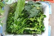 herbs_veges