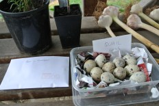 quaileggs_peas_garlic