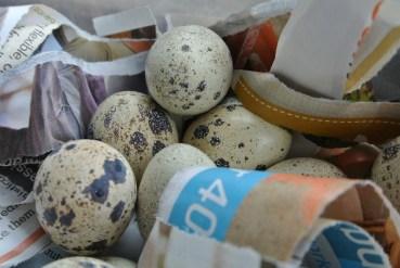 quails_eggs