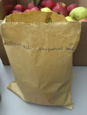 perpetual_spinach