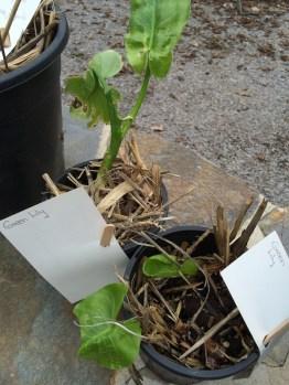 pot_plant2