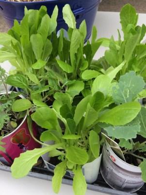 veg_seedlings
