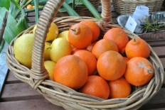 grapefruit_tangelo
