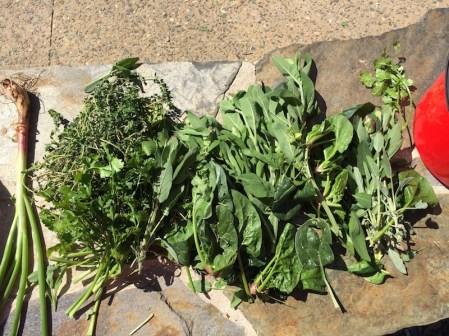 various_herbs