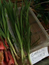 garlic_chives